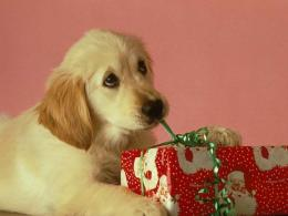 Happy Christmas Dog WallpapersBeautiful Wallpaper 401