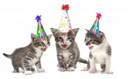 Funny cats wish you happy birthday | HD Wallpapers Rocks 1678
