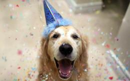 Happy celebrating dog wallpaper 972