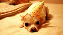 Happy Birthday Funny Images HD Wallpaper of Greetinghdwallpaper2013 971
