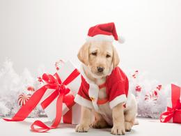 christmas dog wallpaper 2015Grasscloth Wallpaper 1029