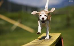 YouWallHappy Dog Wallpaperwallpaper,wallpapers,free wallpaper 726