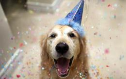 Happy Dog Celebrates The New Year Hd Wallpaper | Wallpaper List 1550