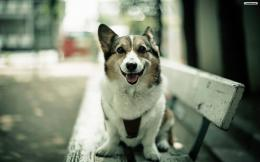 YouWallHappy Dog Wallpaperwallpaper,wallpapers,free wallpaper 1067
