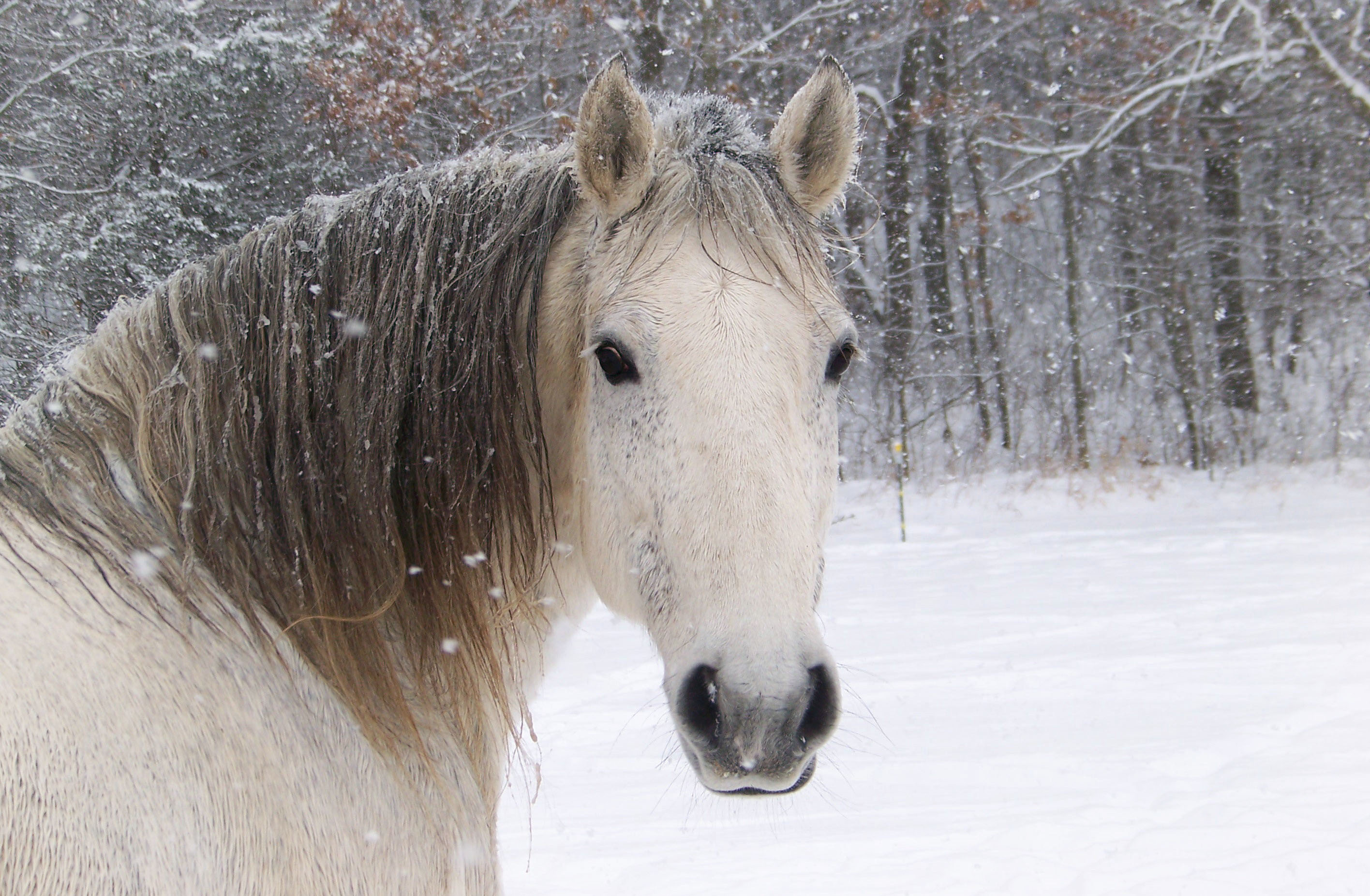 Horse Winter Related Keywords & SuggestionsHorse Winter Long Tail 376