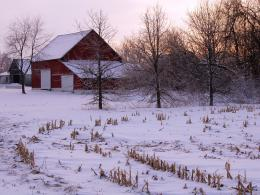 that crystallized during cold winter nightUncommon for Indiana 196