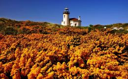 Yellow Wildflowers And Lighthouse Hd Wallpaper | Wallpaper List 289