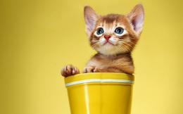 Kitten cat red boots white yellow cat cats wallpaper | 1920x1200 187