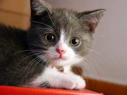 kitten wallpapers to share on your desktop a great site for any kitten 637