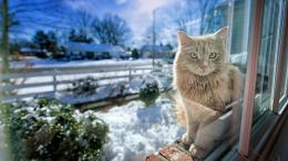 Description: The Wallpaper above is Cat winter sunshine Wallpaper in 884