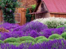 EarthLavender Cottage Wallpaper 839