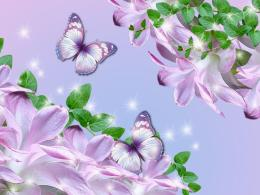 Essence Of Lavender Collage Hd Wallpaper | Wallpaper List 1700