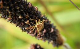 Macro Rice Stick Bug Hd Wallpaper | Wallpaper List 1884