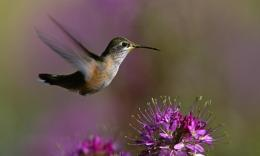 Macro Of Hummingbird Hd Wallpaper | Wallpaper List 1230