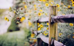 Fence Flowers Yellow Macro Nature HD WallpaperFreeWallsUp 1150