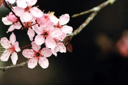 Cherry Blossom Wallpaper by SchrodingersCat19 on DeviantArt 761