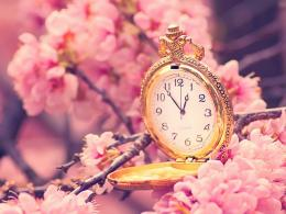 Flower Wallpapers For You: Japanese Cherry Blossoms Wallpaper 824