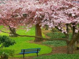 wallpaper spring blossoms wallpaper nature sakura flower wallpaper 477