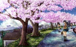 HD Wallpapers Desktop: Sakura Tree HD Wallpapers 1665