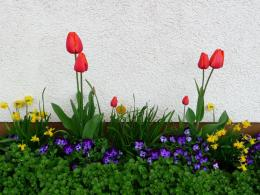 1024x768 Wallpaper tulips, pansies, daffodils, flower, flowerbed 275