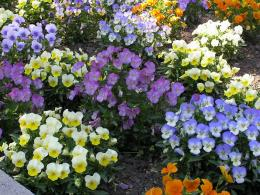 1400x1050 Wallpaper pansies, flowers, flowerbed, bright, colorful 705