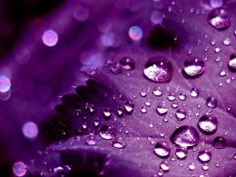 purple background with bubbles hd desktop wallpaper high definition 422