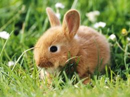Rabbit habitats include meadows, woods, forests, grasslands, deserts 1206