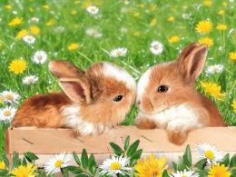 in garden, Bunny, couple, daisy, flower, garden, grass, rabbit 69770 1112