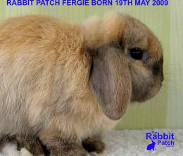 The Rabbit PatchFree Rabbit Patch Wallpapers 859