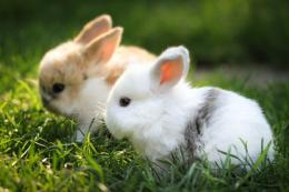 Rabbits Couple in Lawn wallpaper | Best HD Wallpapers 1085