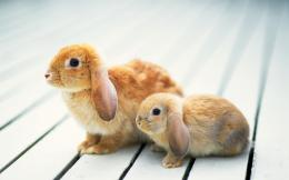 Cute Rabbits HD Wallpaper Download | Hd Wallpapers 2u Free Download 937