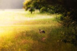 Download wallpaper rabbit, hare, bunny, Zayats free desktop wallpaper 1252