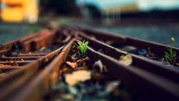 Grass tracks train tracks wallpaper | 2560x1440 | 59147 | WallpaperUP 196