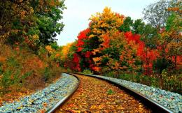 Download Beautiful Rail Track View In Fall Season HD Wallpaper 1138