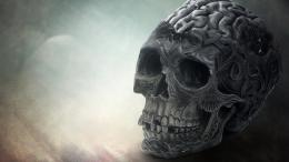 Download Brain skull wallpaper in 3DAbstract wallpapers with all 701