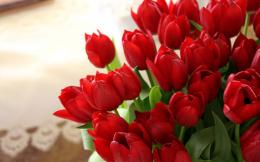 : Red Tulips Wallpapers, Red Tulips Desktop Wallpapers, Red Tulips 1273