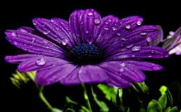 Dew Drops Flowers Wallpaper 1180