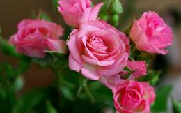 Download Wallpaper roses, flowers, buds, drops, dew HD Background 1976