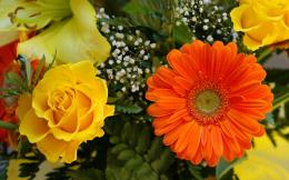 Pin Roses And Gerbera Wallpaper 2560x1600 on Pinterest 895