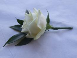 small white rose buttonhole for the younger member 1530