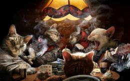 poker cats! Wallpaper Background | 3551 649