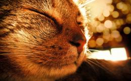 background sleep soundly small cat wallpaper | Animal Wallpapers 481