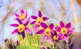 bokeh wallpaper in flowers plants wallpapers with all resolutions 1345