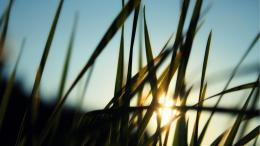 Sunrise Through The Grass wallpaper in Flowersplants wallpapers 1707