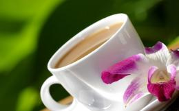 Good morning tea and flowers wallpaper | HD Wallpapers Rocks 1464