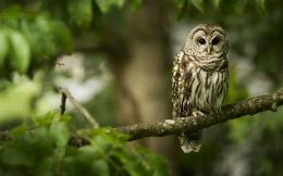 Owl On A Tree | Search Results | Calendar 2015 188