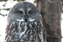 owl appeared to cross its eyes, but before we knew it, the owl was 892