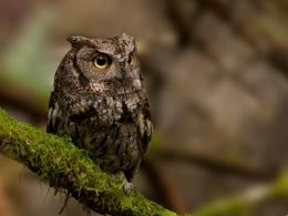 Download Owl on branch moss wallpaper in Animals wallpapers with all 1796