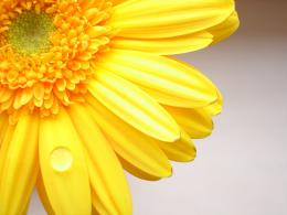 Yellow color flower wallpaper 500