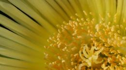 Yellow flower wallpaper download, free Yellow flower, Yellow flower hd 554